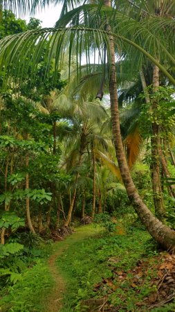 Rosalie Bay Resort: On the nature trail