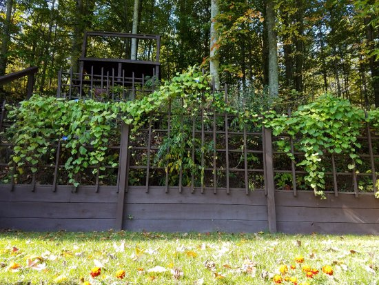 Boyne City, MI: Wisteria arbor and stage with morning glories in bloom.