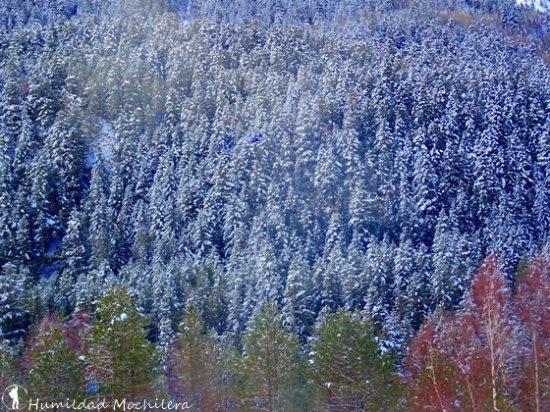 Parque Nacional de Aigüestortes (Parc Nacional d'Aigüestortes): Así de veían los árboles tras la nevada que hubo unos días antes.