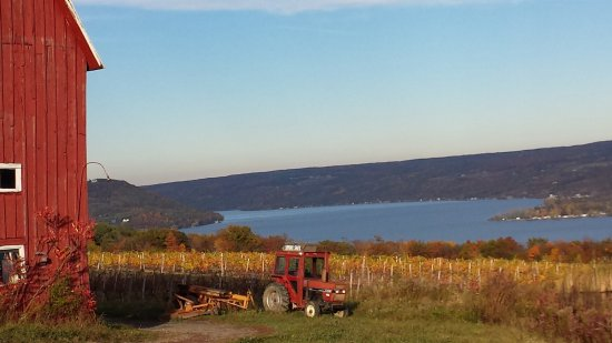 Farm Sanctuary: The view of surrounding areas out of the farm. Finger lakes.