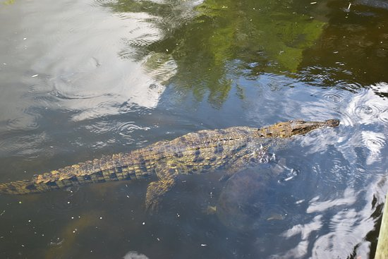 Clewiston, FL: Animals we saw while taking the Airboat Ride.