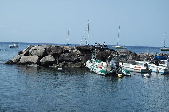 Basse-Terre, Guadeloupe: pequeño puerto y pelícanos