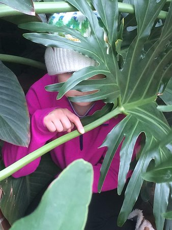 Phipps Conservatory: Hiding