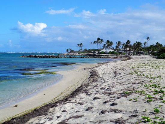 Nisbet Plantation Beach Club: The wonderful private beach - golden sand and great shells