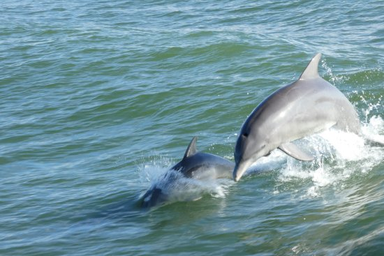 Pineland, Флорида: And even dolphins join us on the way back!