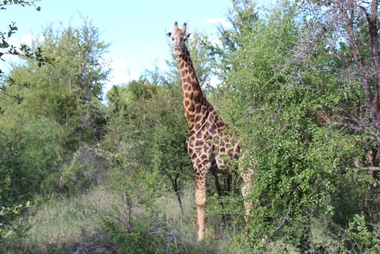 Siyafunda Conservation