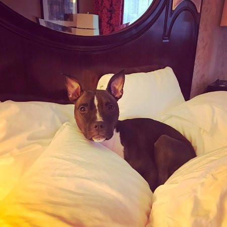 Kimpton Hotel Monaco Chicago: She also loved the people bed (more pillows, please!)