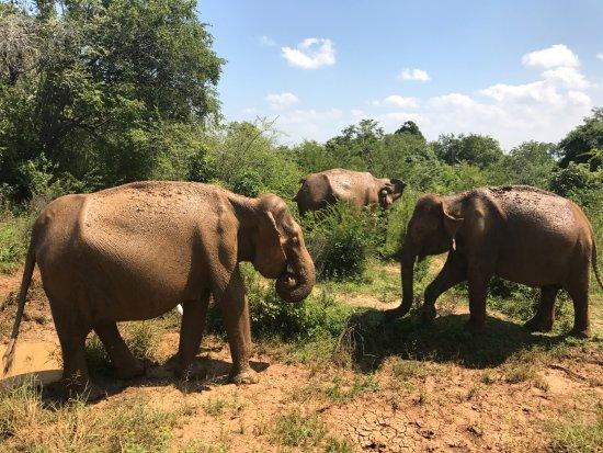 Kalutara, Sri Lanka: Uduwalawe