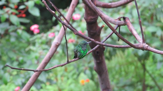 Jardin Botanico del Quindio: Around humming bird feeder
