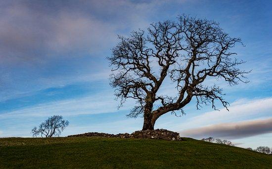 Ballygawley, Irlanda: Tree on golf course