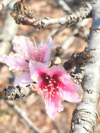 Palma Sola Botanical Garden : Flowering fruit tree