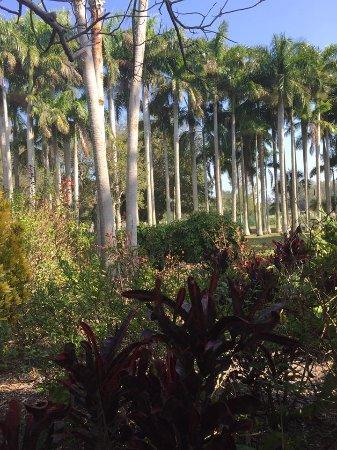 Palma Sola Botanical Garden : Palms