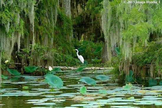Marrero, LA: Beautiful scenery of the swamp