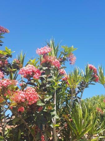 Corais e Conchas: Excelente trabalho de jardinagem