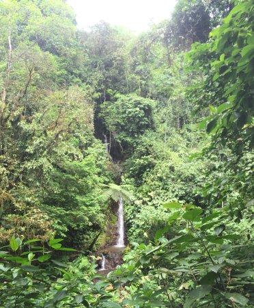 Parrita, Costa Rica: Rainforest view