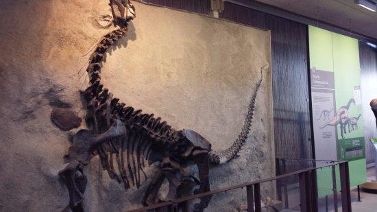 Dinosaur, CO: Skeleton