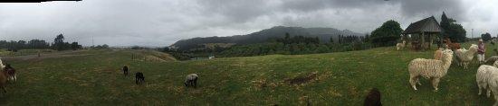 Ngongotaha, Yeni Zelanda: photo1.jpg