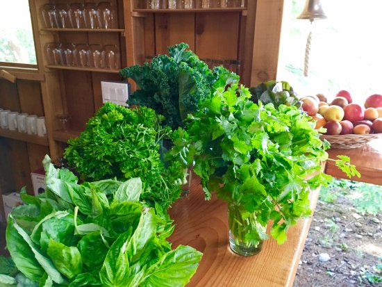 Powell River, Canada: Fresh greens and herbs in the Cabana Cafe