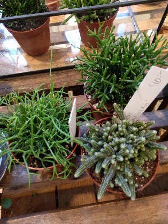 Lund, Sweden: Cacti in the shop