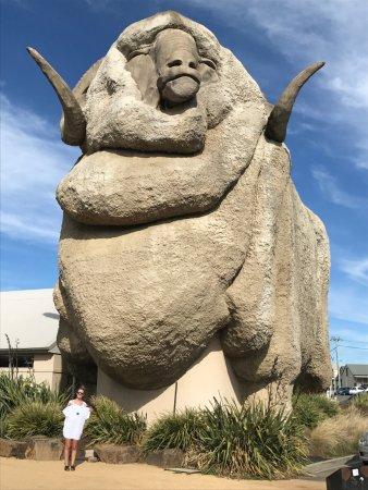 Goulburn, Australia: he is a Big Merino