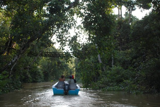 Sukau, มาเลเซีย: Boat trip with the orang-utan bridge above