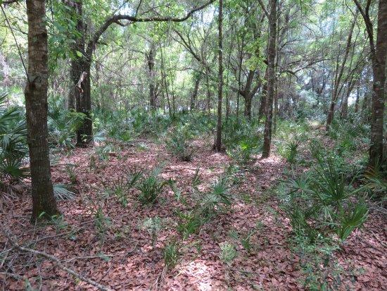 Winter Haven, FL: vegetation