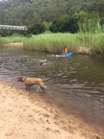 St. Albans, Australia: Dogs had the best time