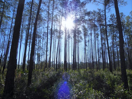 Webster, FL: Beautiful forest