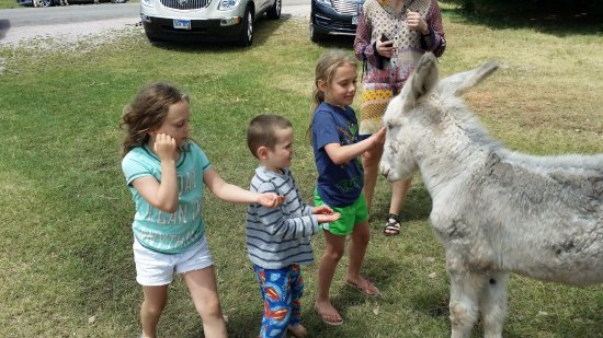 Custer State Park: Kids enjoyed up close and personal with the burros
