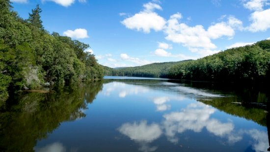 Dungog, Australië: Chichester Dam nearby