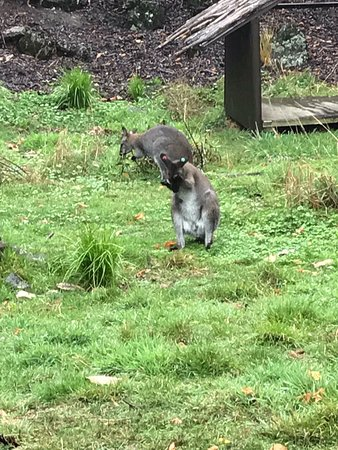 Auckland Zoo: photo9.jpg