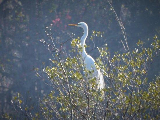 Leesburg, FL: Crane in a tree