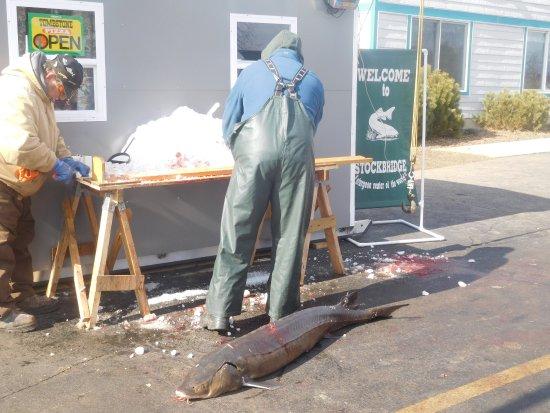Chilton, Ουισκόνσιν: Anybody seen a really big fish around here?