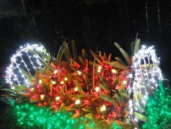 Fort Pierce, FL: Un lit de fleurs