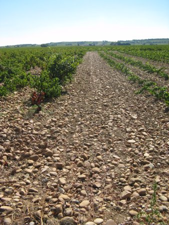 Orange, Francja: more galets in the vineyard