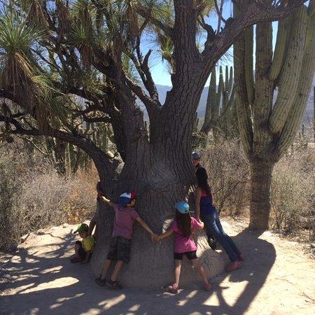 Tierraventura Ecoturismo  Day Tours: Jardin Botanico Helia Bravo