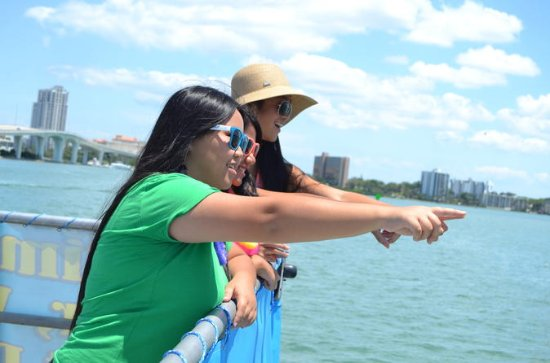 Clearwater Bay, Gulf Coast Dolphin Watching Cruise 2-Hour Tour