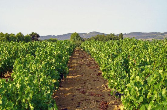 Private Provence Wein Tour mit...
