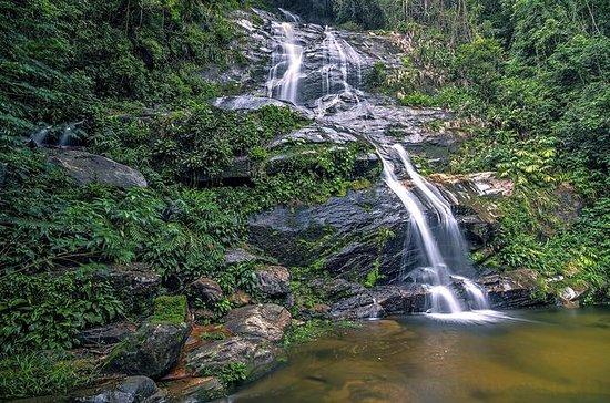 Excursão Particular à Floresta da...