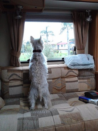 Waihi, New Zealand: The little dog likes to keep an eye on things...