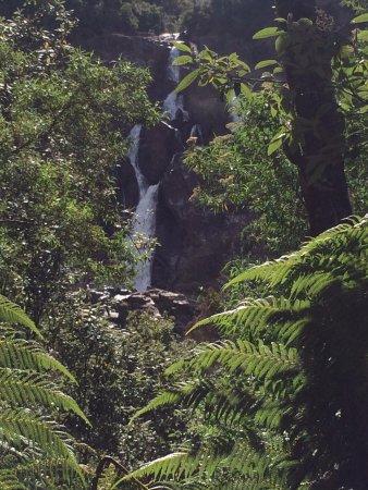 St Helens, Australia: Through the trees view