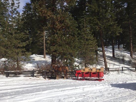 Leavenworth, WA: Picture of the private sleigh