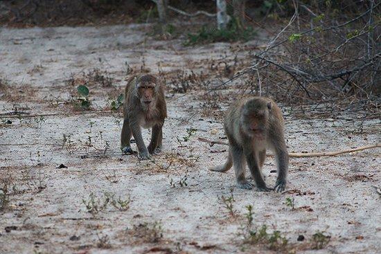 Tha Yang, Thailand: Macaques in large natural habitat at WFFT