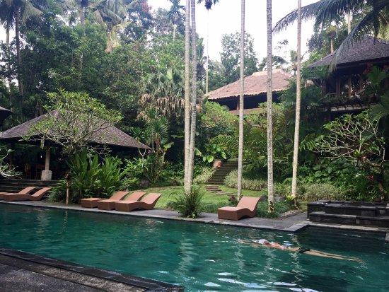 Mas, Indonesia: Stunning pool......