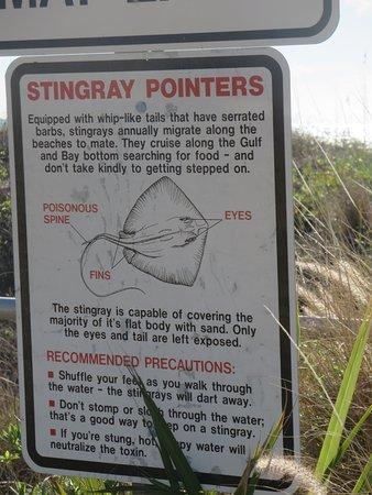 Redington Shores, Флорида: How to do the stingray shuffle