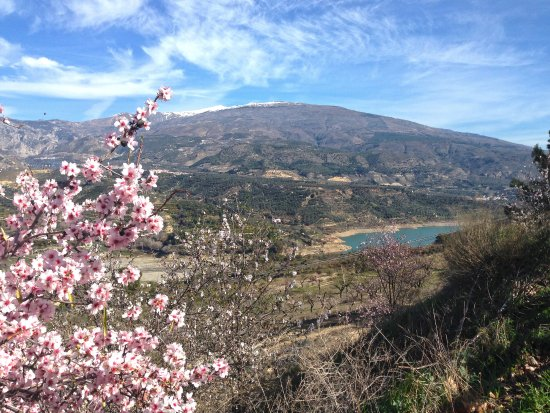 Lecrin Valley, Ισπανία: El Valle de Lecrín. Almendros en flor. Embalse de Béznar