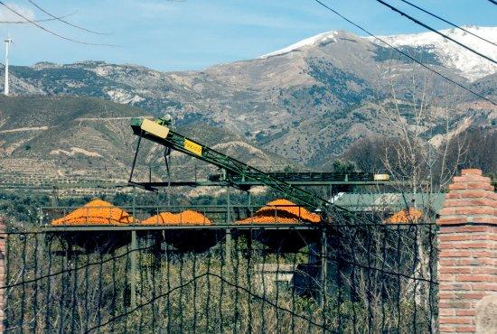 Lecrin Valley, Ισπανία: La cooperativa de Naranjas del Valle