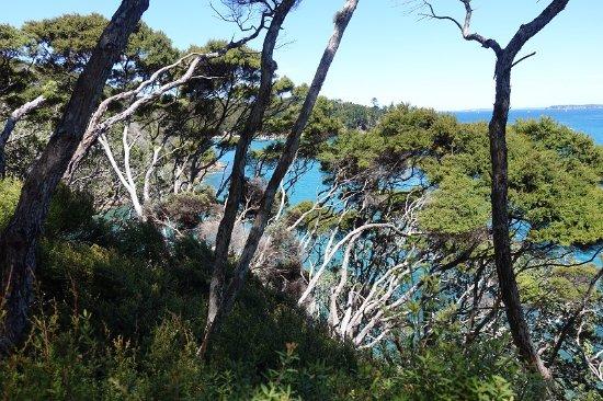Warkworth, نيوزيلندا: Вид с вершины Kawau Island