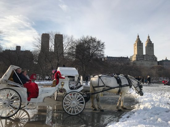 Central Park Sightseeing : photo0.jpg