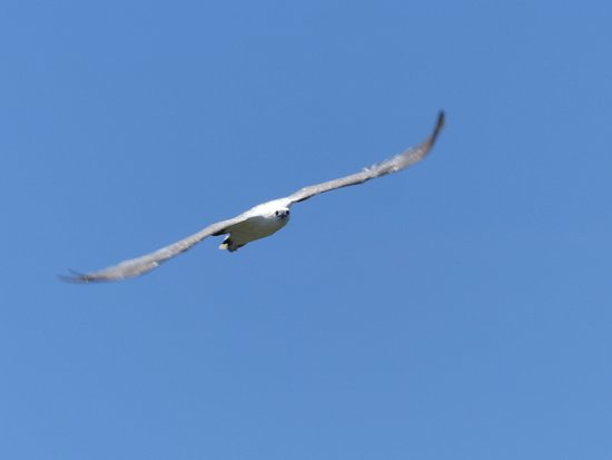Tweed Heads, Αυστραλία: Birds only 10-20m away